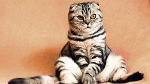 Освежители воздуха объявлены опасными для кошек