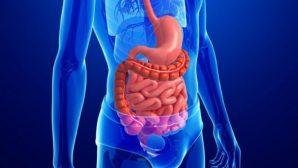 Ученые рассказали, какие продукты разрушают кишечник