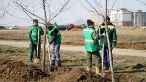 В Нур-Султане высадят 30 тысяч деревьев и 6 млн цветов