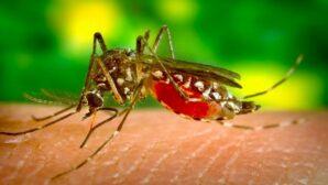 Ученые: комары не являются переносчиками коронавируса
