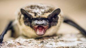 В Китае обнаружили летучую мышь в банке с соусом