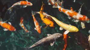 В Кызылординской области начнут развивать рыбное хозяйство